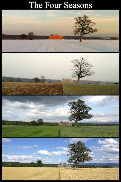 Four Seasonsklein
