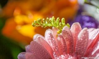 Web  2013 03 05  Splash Fotografie Blumen Strauß Öl 100 mm 1 400 Sek bei f  3 2 EF100mm f 2 8L Macro IS USM 1