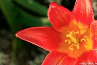 Web  2009 04 09  Makroaufnahmen Frühjahr Pfrondorf Blüten 60 mm 1 400 Sek bei f  7 1 EF S60mm f 2 8 Macro USM 1 4