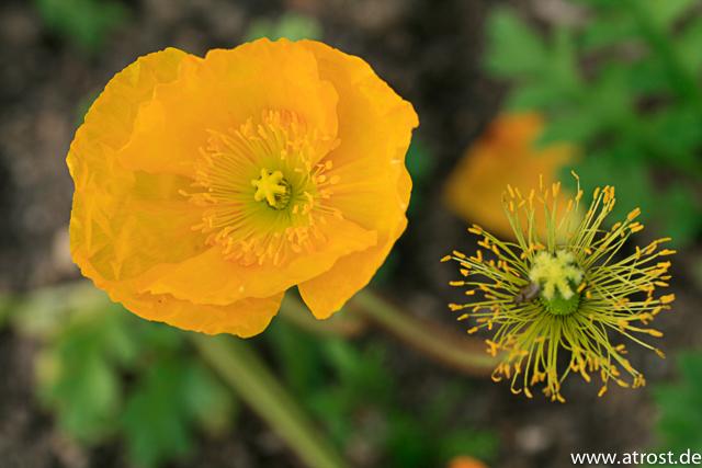 web-2009-04-12-orleans-60-mm-1-200-sek-bei-f-50-ef-s60mm-f-2-8-macro-usm-1